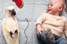 История о маленьком мальчике и ревнивом попугае, которые стали друзьями