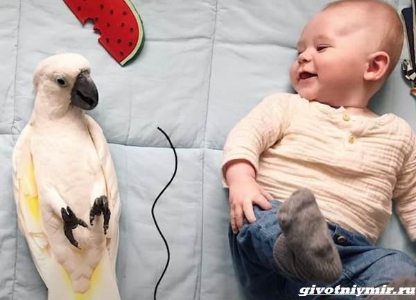 История-о-маленьком-мальчике-и-ревнивом-попугае-которые-стали-друзьями-1