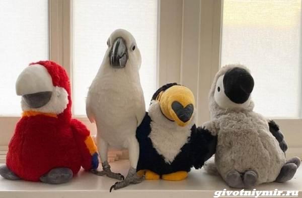История-о-маленьком-мальчике-и-ревнивом-попугае-которые-стали-друзьями-4
