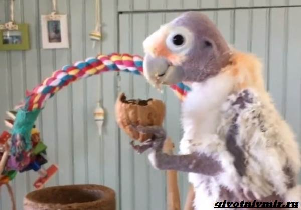 История-о-мужчине-который-не-слишком-любил-птиц-пока-не-встретил-пернатую-подругу-2