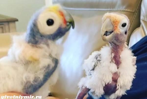 История-о-мужчине-который-не-слишком-любил-птиц-пока-не-встретил-пернатую-подругу-5