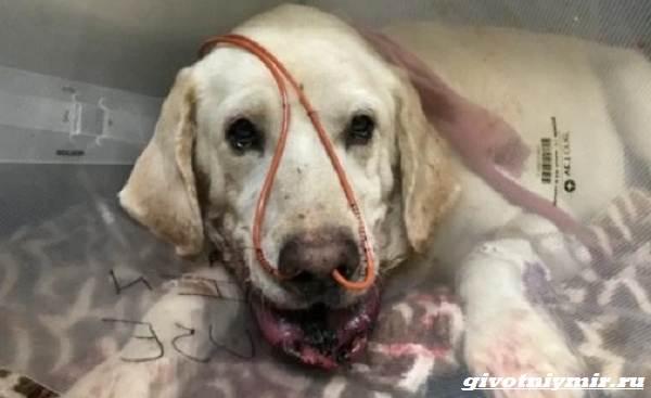 История-о-собаке-которая-спасла-хозяина-от-змеи-3