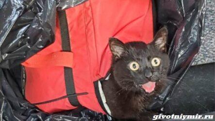 История о брошенной в сумке кошке и ее спасении