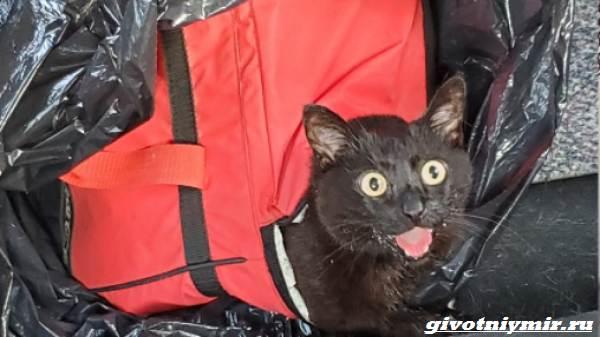 История-о-брошенной-в-сумке-кошке-и-ее-спасении-1