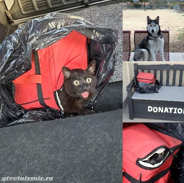История-о-брошенной-в-сумке-кошке-и-ее-спасении-3