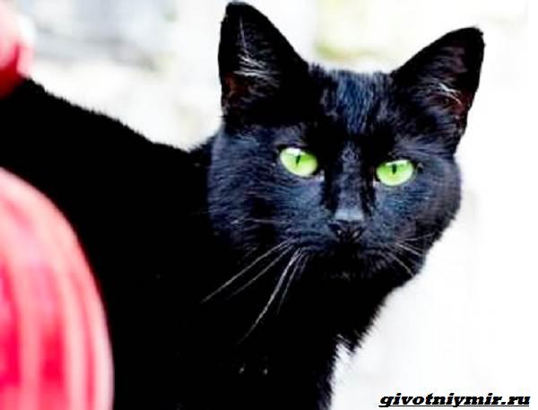 История-о-брошенной-в-сумке-кошке-и-ее-спасении-4