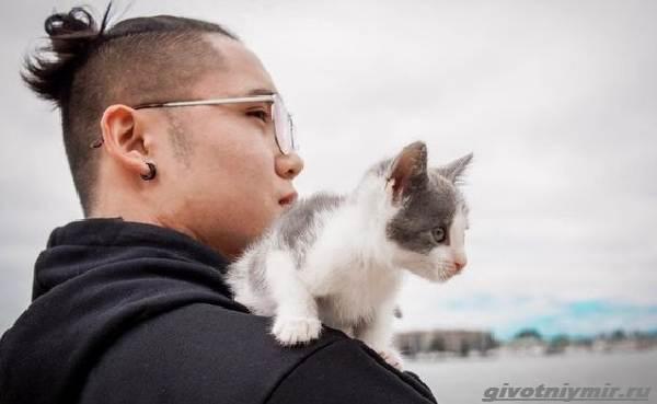 История-о-бывшем-бездомном-котенке-который-любит-сидеть-на-плече-у-хозяина-1