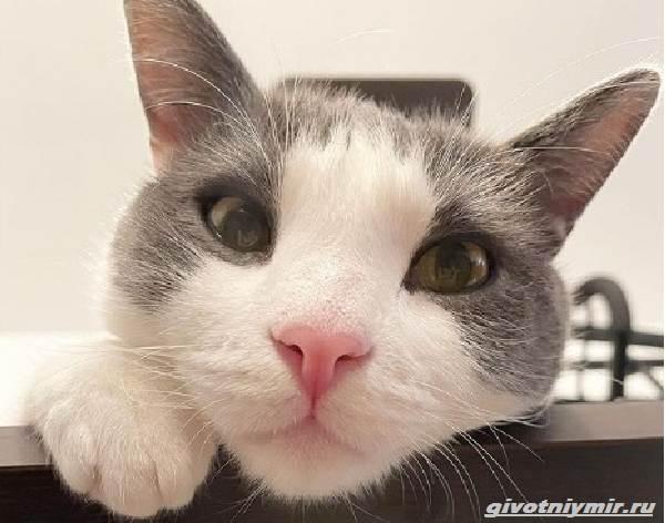 История-о-бывшем-бездомном-котенке-который-любит-сидеть-на-плече-у-хозяина-4