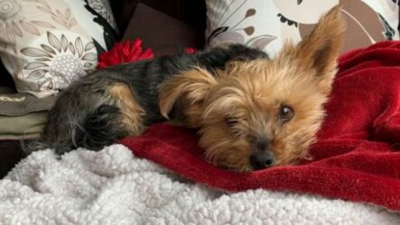 История о храброй собаке Мейси, которая спасла хозяйку от койота