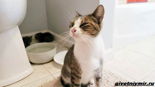 История-о-кошке-которая-пробралась-с-котятами-в-чужой-гараж-1