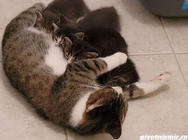 История-о-кошке-которая-пробралась-с-котятами-в-чужой-гараж-2
