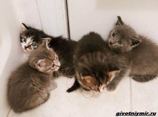 История-о-кошке-которая-пробралась-с-котятами-в-чужой-гараж-3
