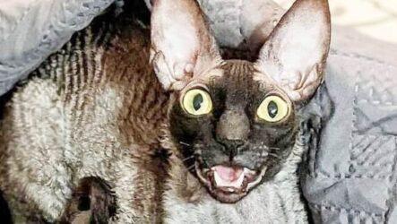 История о коте с пугающей внешностью