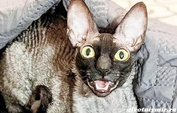 История-о-коте-с-пугающей-внешностью-1