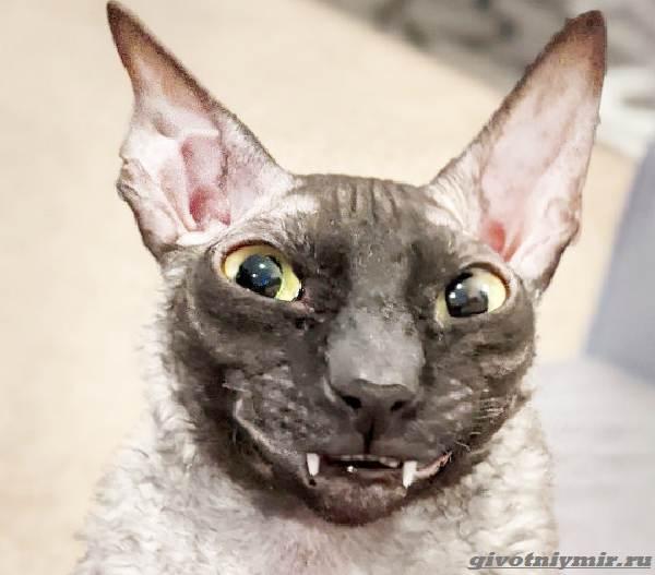 История-о-коте-с-пугающей-внешностью-2