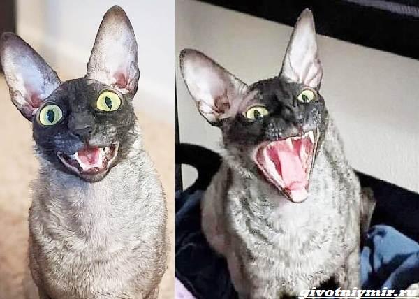 История-о-коте-с-пугающей-внешностью-3