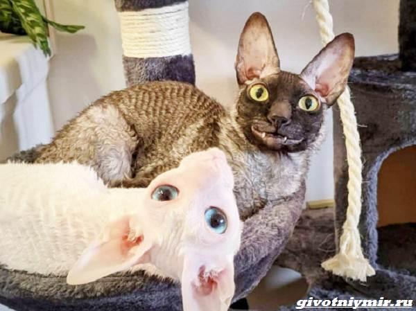 История-о-коте-с-пугающей-внешностью-4