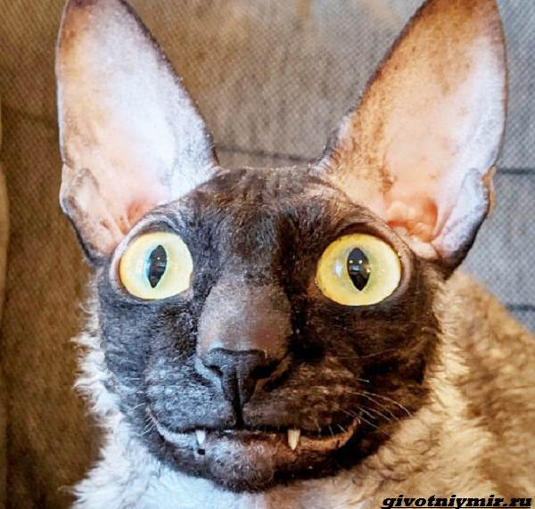 История-о-коте-с-пугающей-внешностью-5