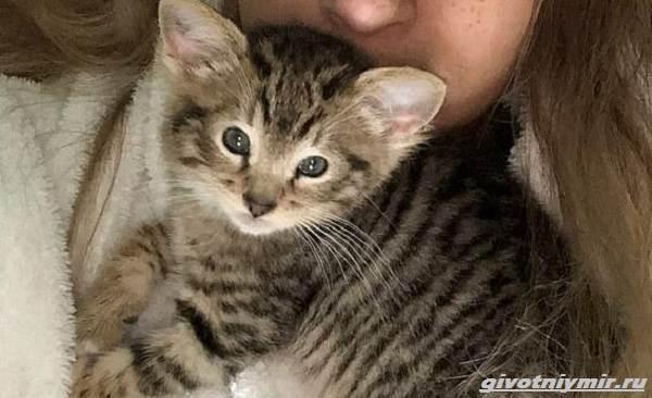 История-о-коте-у-которого-четыре-уха-1