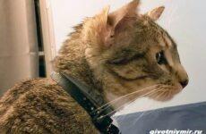История о коте, у которого четыре уха