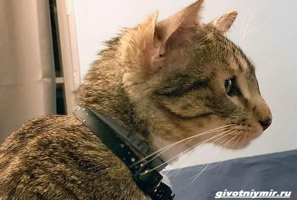 История-о-коте-у-которого-четыре-уха-2