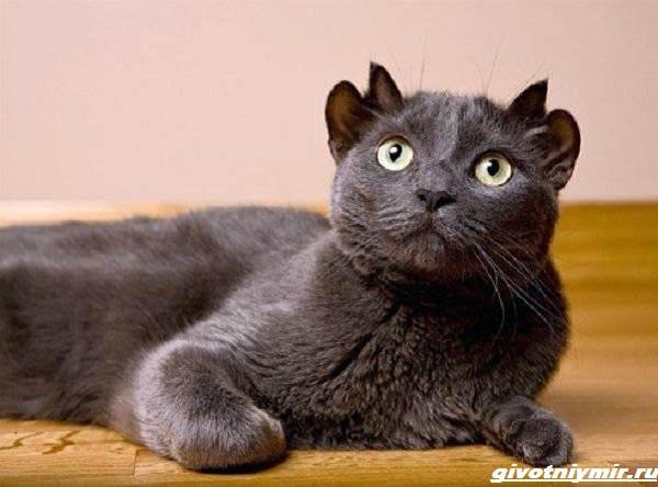 История-о-коте-у-которого-четыре-уха-3