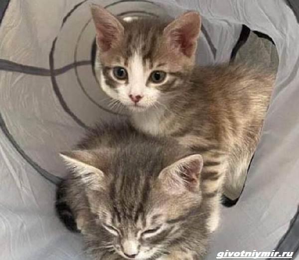 История-о-котятах-которые-оказались-внутри-мусорного-бака-2