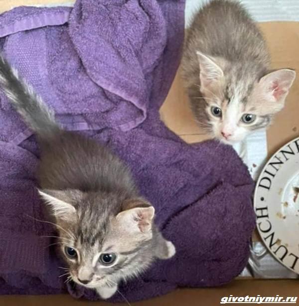 История-о-котятах-которые-оказались-внутри-мусорного-бака-3