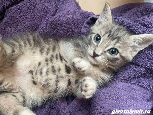 История-о-котятах-которые-оказались-внутри-мусорного-бака-4