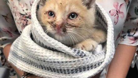 История о котёнке, который пришел в чужой двор за помощью