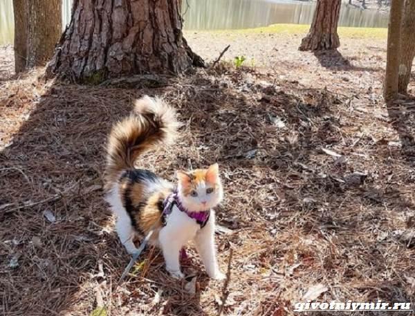 История-о-красивой-трехцветной-кошке-с-гетерохромией-4