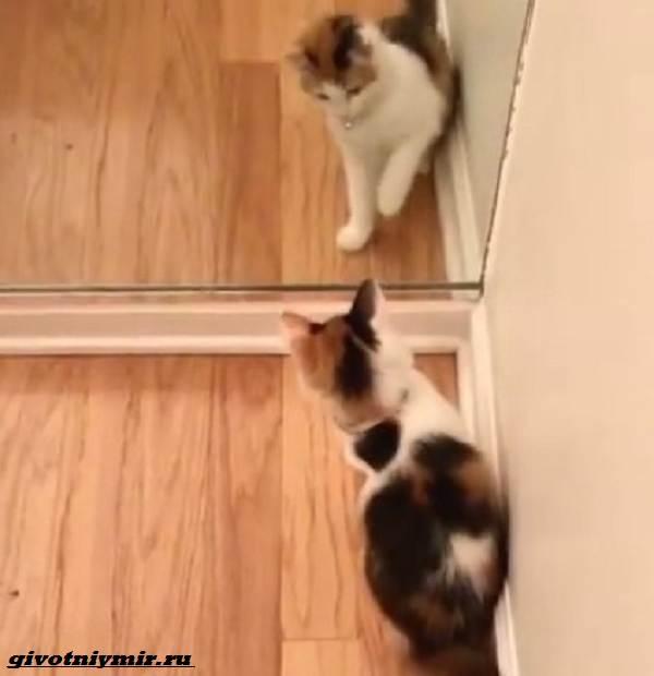 История-о-красивой-трехцветной-кошке-с-гетерохромией-5