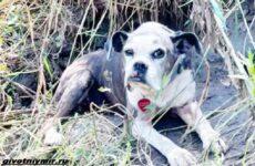 История о пропавшей собаке, которую нашли на берегу реки