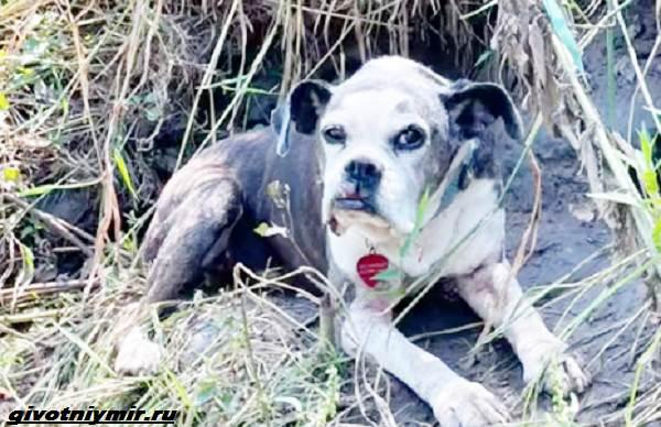 История-о-пропавшей-собаке-которую-нашли-на-берегу-реки-1