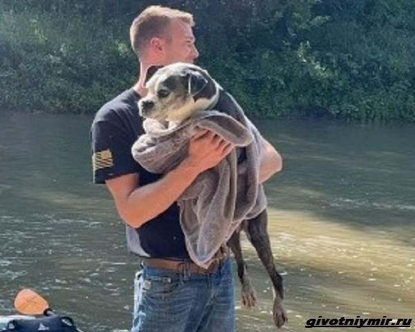 История-о-пропавшей-собаке-которую-нашли-на-берегу-реки-3