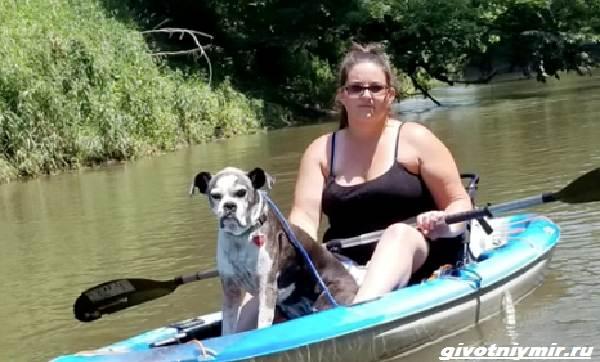 История-о-пропавшей-собаке-которую-нашли-на-берегу-реки-4