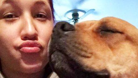 История о собаке, которую хозяйка искала и нашла в приюте