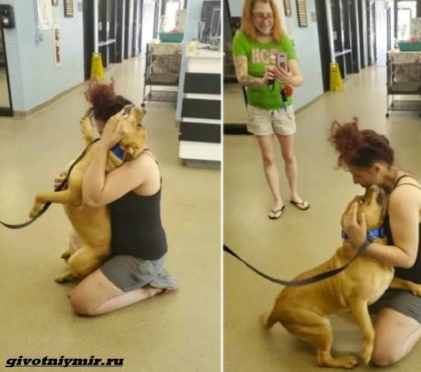 История-о-собаке-которую-хозяйка-искала-и-нашла-в-приюте-4