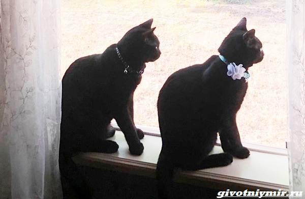 История-о-спасенном-коте-который-дарит-своему-хозяину-спокойствие-2