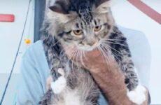 Две истории о кошках, которые стали орудием мести в руках ссорящихся людей