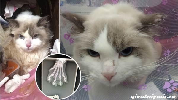 Две-истории-о-кошках-которые-стали-орудием-мести-в-руках-ссорящихся-людей-3