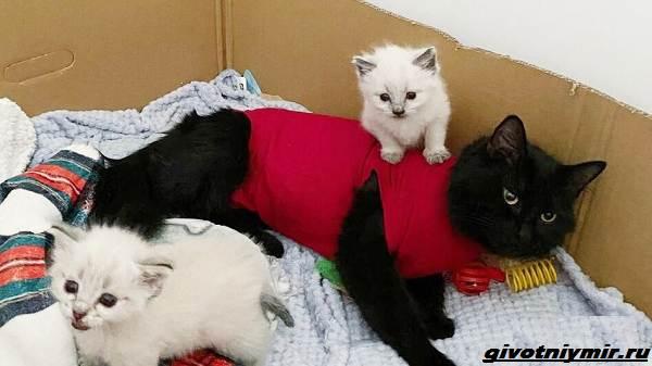 История-о-бездомной-черной-кошке-и-ее-двух-серо-белых-котятах