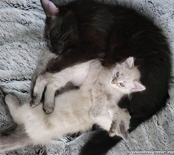 История-о-бездомной-черной-кошке-и-ее-двух-серо-белых-котятах-3