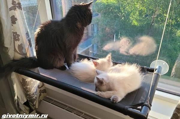 История-о-бездомной-черной-кошке-и-ее-двух-серо-белых-котятах-4