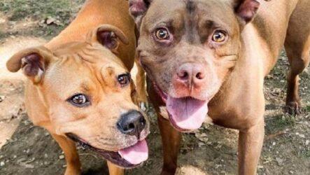 История о двух собаках, которые встретились спустя 2 года