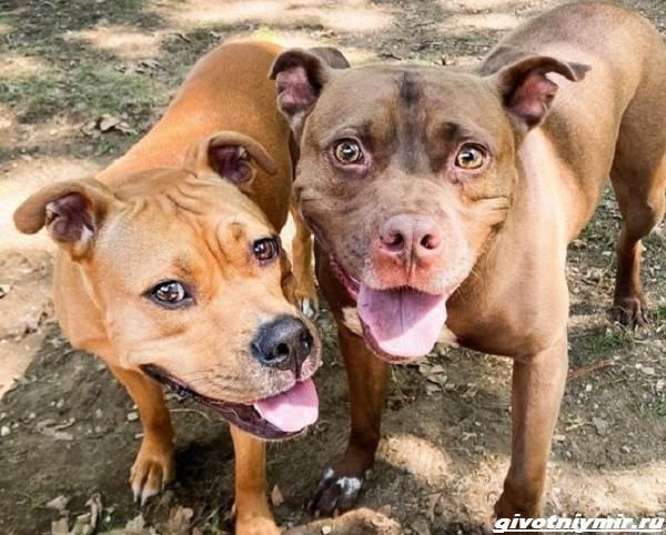История-о-двух-собаках-которые-встретились-спустя-2-года-1