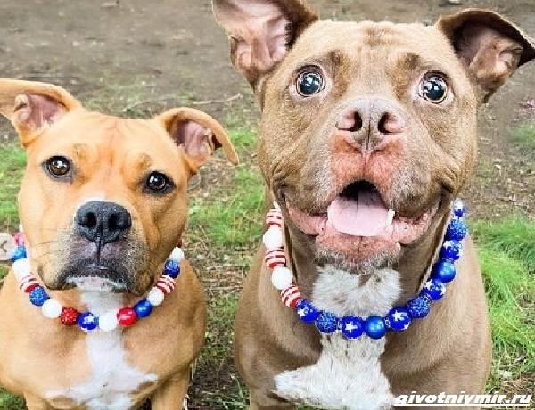 История-о-двух-собаках-которые-встретились-спустя-2-года-2