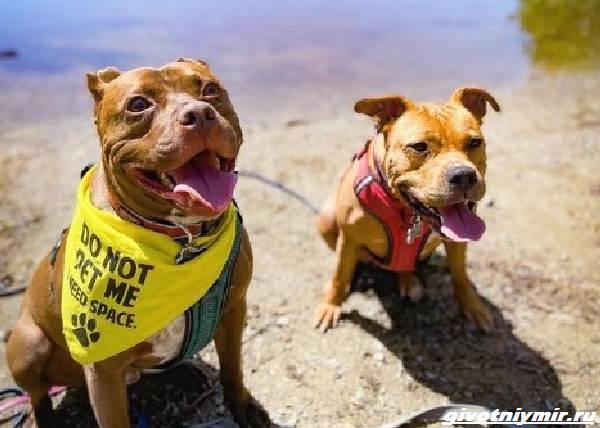История-о-двух-собаках-которые-встретились-спустя-2-года-5