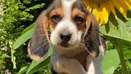 История о щенке с «заячьей губой» и добром ветеринаре