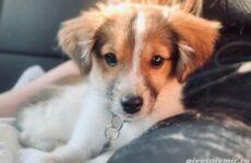 История о собачке Ву, оставленной в коробке под ветлечебницей